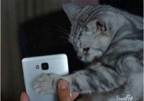 心血来潮用猫指纹做手机解锁的结果.真搞笑
