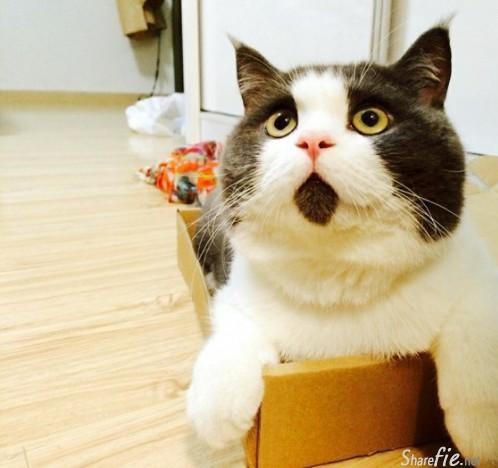 好可爱的猫咪。这只猫咪的胎记长的位置有点。。