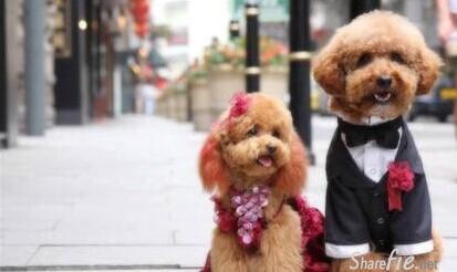 狗狗结婚照,真幸福!(多图)