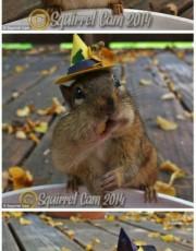每次发现松鼠时,是不是一瞬间就闪的无影无踪呢,那接下来的影片肯定让你大开眼界,小鼠鼠的一举一动把食物一粒一粒的塞。真是可爱到了极点