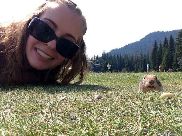 加拿大有位女孩竟能与土拨鼠超近距离自拍,她只做了一件简单的事