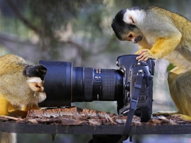 29张当动物遇到相机的可爱表情,这是什么东东啊,看到最后一张那只猫的动作太经典了,我笑翻了