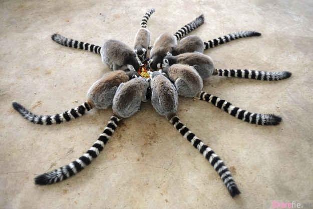 这是异形怪物吗!看起来就好像是一只毒蜘蛛