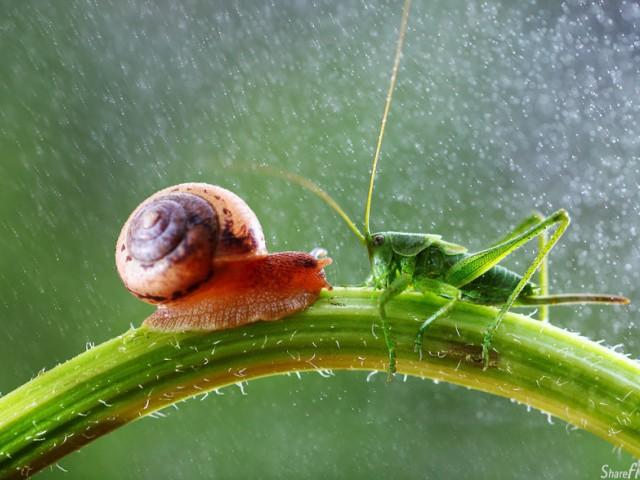 26张蜗牛与虫仔们的微距摄影..让你凝视着微小但不渺小的生命