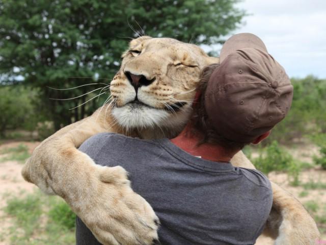 令人难以相信!好大只狮子向男子撒娇投怀送抱,看完影片看到了这份好难得的感情