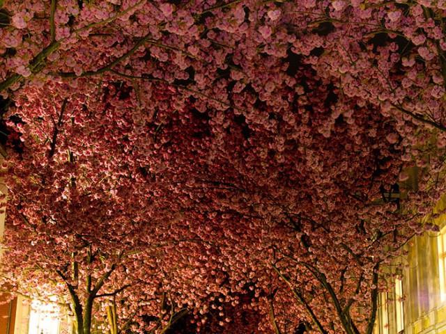 23张世界各地佈满树木和花朵的街道,如诗如画的街道奇景,看了好想马上去拍照