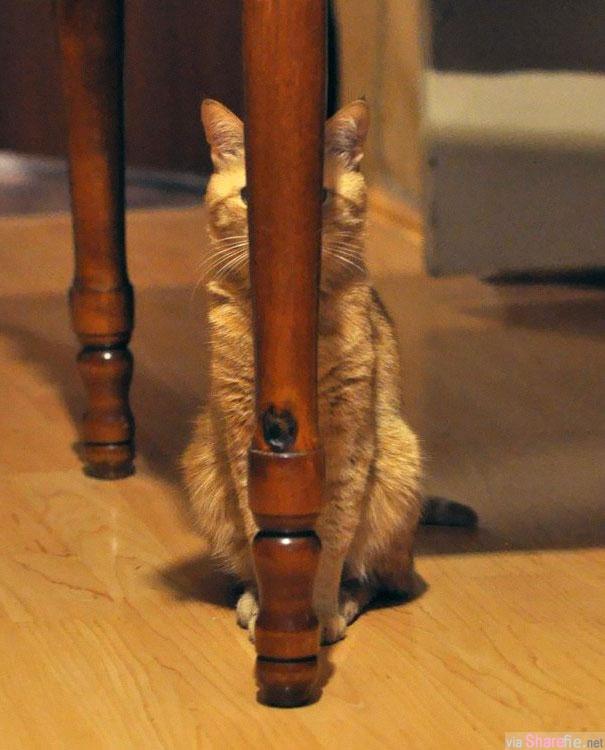 """36张施展忍者术的猫咪, 它们最厉害的一招就是号称失传已久的""""躲猫猫""""隐身术了"""