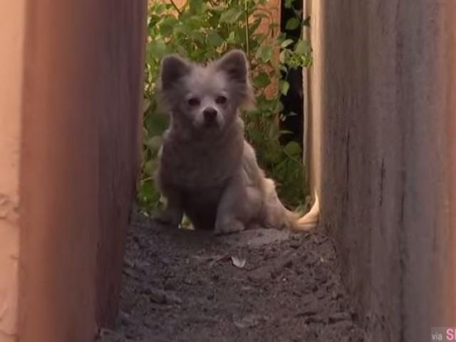 这只本来很活泼开朗的小狗,它的主人对它做了让所有人都感到非常火滚的事
