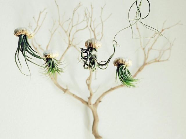 在贝壳里种了弯曲的植物,就这样变成了家里翩翩起舞的水母