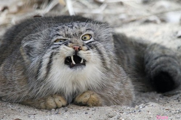13张动物们被捕捉到好像白痴的丑模样,尤其那只狗狗的表情和猫猫的咪咪眼太可爱了