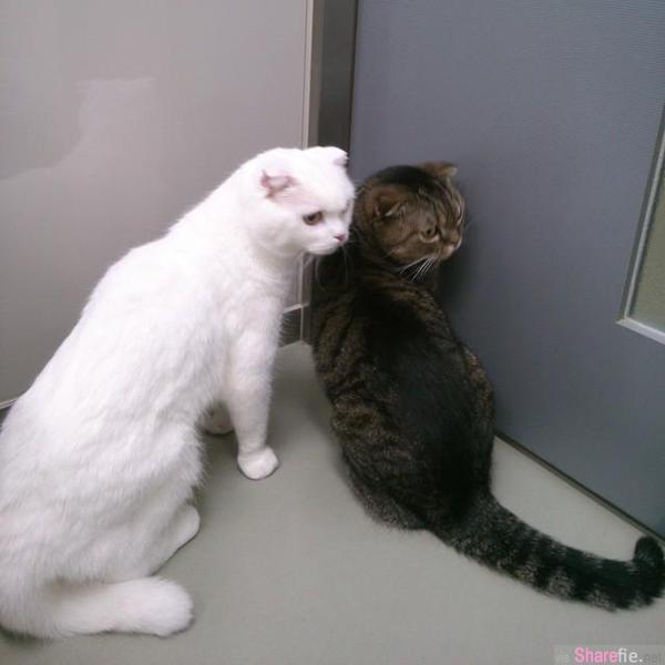 「放開我!我不要去醫院!」 動物看病反應爆笑大集合