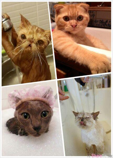 54张证明其实小猫一点都不怕水..还不快放水过来