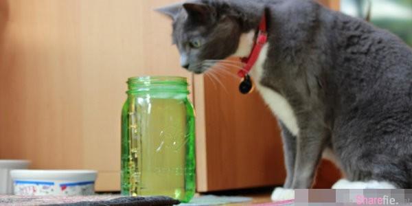 你也為了讓喵喵多喝水而困擾嗎?! 教你如何提昇貓咪飲水量的10大妙招!!