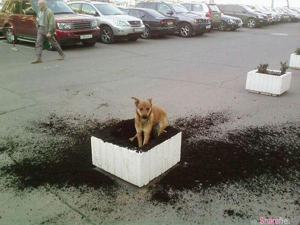 23张狗狗界里的无恶不作的大坏蛋..做了坏事还面不改色
