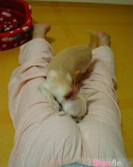 这只狗狗把鼻子塞进那里! 原来这只狗狗有个非常奇特的怪癖