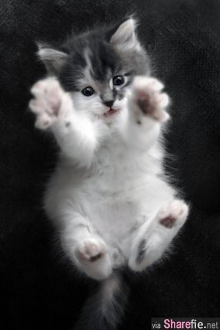 24只猫咪伸懒腰的可爱的动作.这样伸展才舒服啊