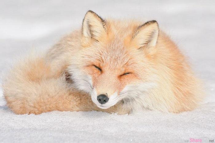 这7种非常可爱的小动物,只能在日本北海道看到,又多了一个去北海道的理由