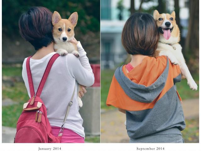 27张狗狗过去与现在的成长对照图,可爱的小狗狗们就好像一夜之间变的好大哦。