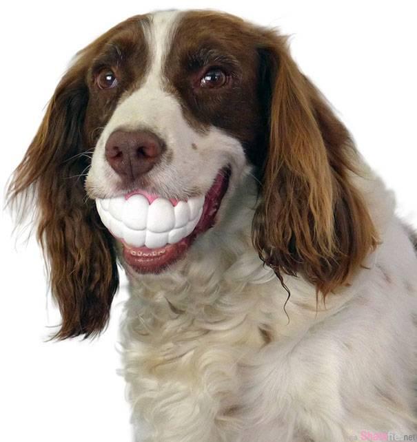 这14只小狗狗的嘴角咬着特别为它们设计的玩具,看了忍不住要笑出来