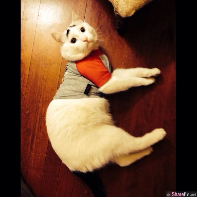 这只网络爆红全身雪白的猫咪,所有人都爱上它那可爱的表情,因为它的脸上长出了很特别的黑黑八字眉