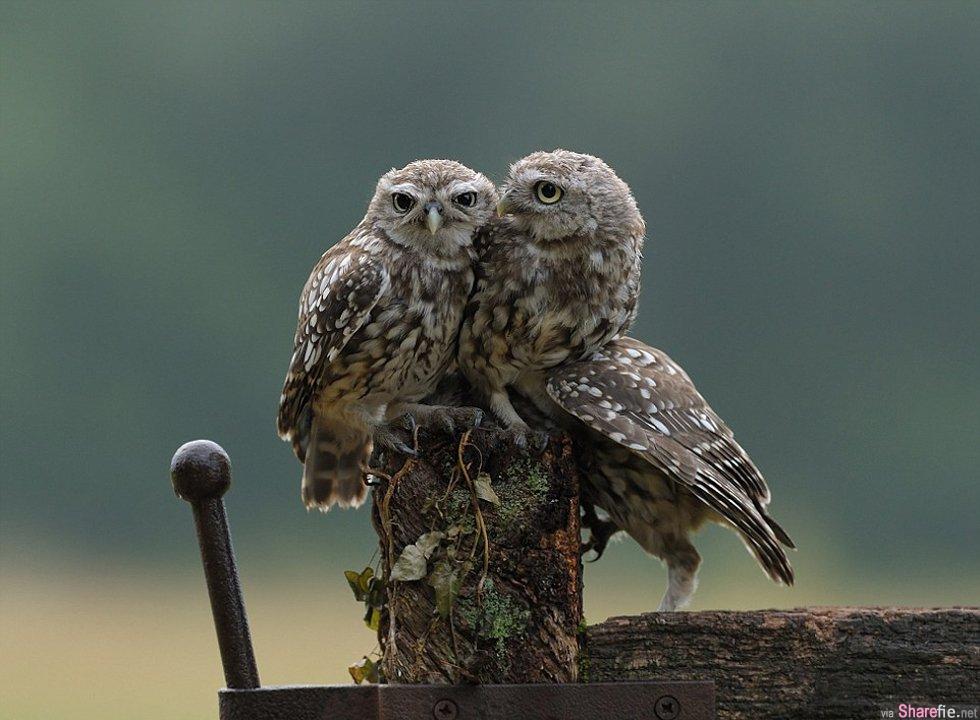 英国这只小小猫头鹰求抱抱的画面,看了好温馨,打动了众网友的心,网络爆红
