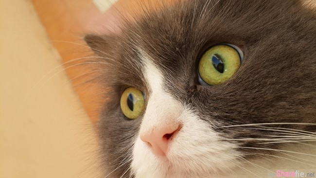 22张超好笑的动物们惊吓表情。。最后一张的表情太经典了