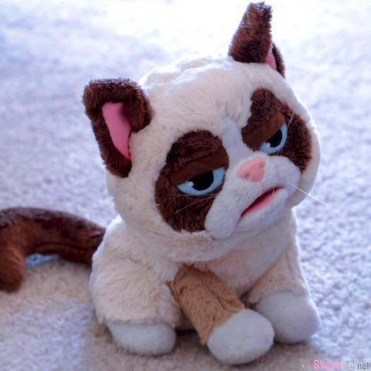 红遍半个地球身价6400万英磅的「不爽猫」Grumpy Cat,  还有比它更贵的猫吗