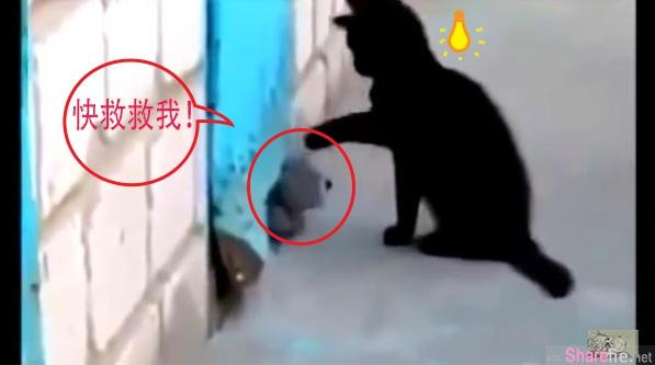 这只黑猫為了搭救受困的狗狗,想出了这好办法,也展现出了一份超越物种的爱
