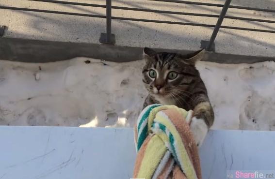这只虎斑貓老愛出門玩,可是主人却住在二楼,结果...久而久之猫咪就是这样回家了