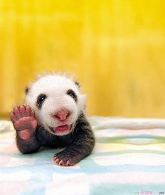 这26只举起手想和你打招呼的小动物,它们的可爱动作即将融化你的心