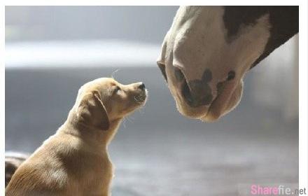 狗狗臨終前的話,希望每1位主人都認真看看!