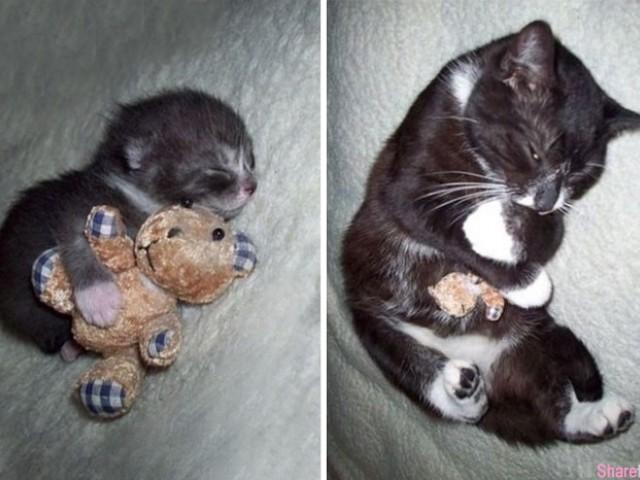 33张狗狗猫咪小时候和长大后抱着玩具的对比照, 长大了还抱着没变大的小玩具,好可爱喔