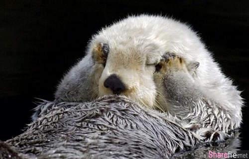 海獺手遮雙眼的理由和腋下的小祕密,听完网友们都笑死,可爱到无法形容
