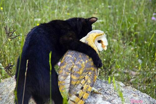 这只黑猫与猫头鹰竟然成了微妙伙伴,天天一起爬樹、打架練身體。