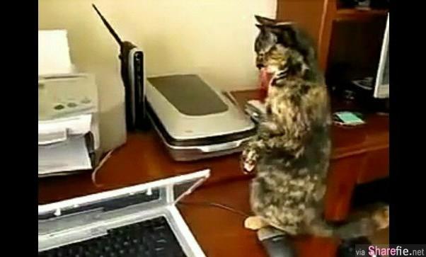 当这只猫咪遇到打印机,立刻变成嘻哈舞蹈高手