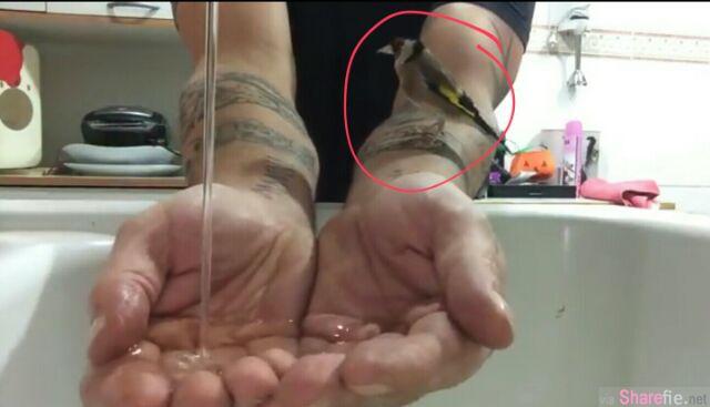 这主人使用双手捧着水,一只小鸟出现,接下来小鸟的动作会让你感惊奇