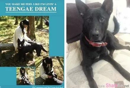 狗的報恩!女子公園遇4歹徒 流浪犬救她一命