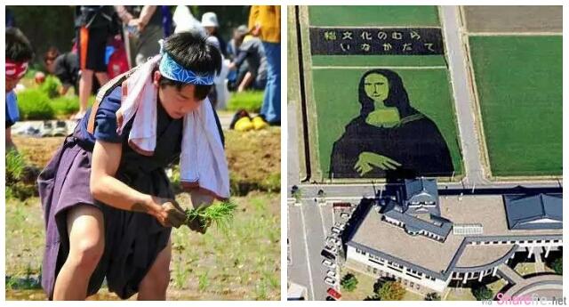 日本農民逆天了 種地都能種出各式巨型稻田画!