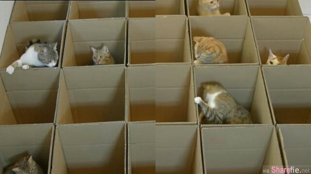 这9只猫咪落入了纸箱迷宫,有一只困在里头的猫咪竟然做了一个好可爱的动作