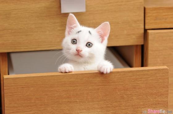 这只小貓咪也长出了八字眉,一脸困惑的模样,体型小小只真的超可爱到不行