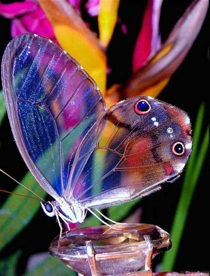 11種奇特的生物,感歎造物主的神奇吧!