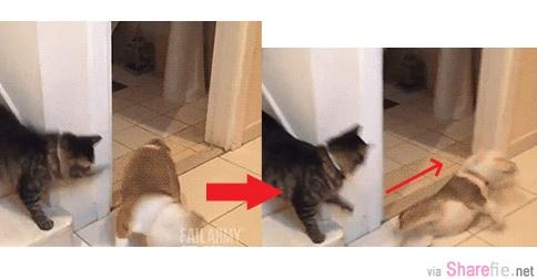 12只貓咪使出鐵拳,最好不要靠近,不然就会像这样...哈