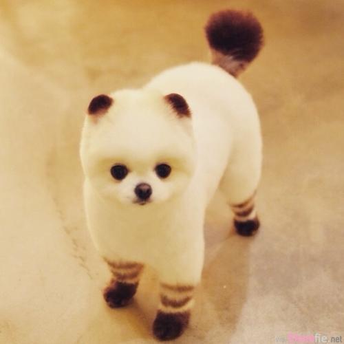 《偽裝成神秘生物的小狗》有沒有偽裝都無限萌