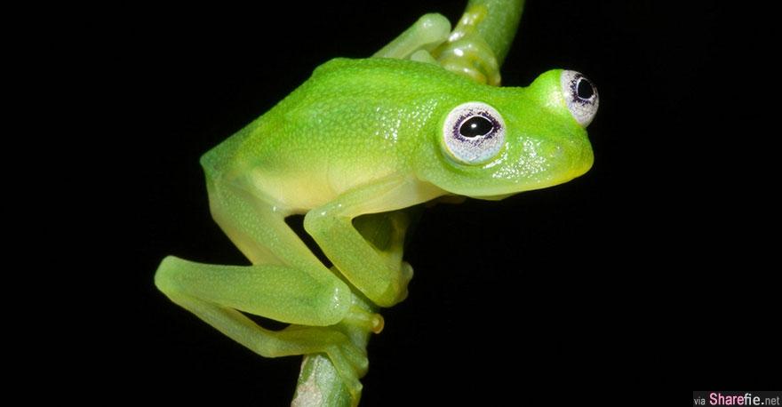 16只世界上最酷的青蛙