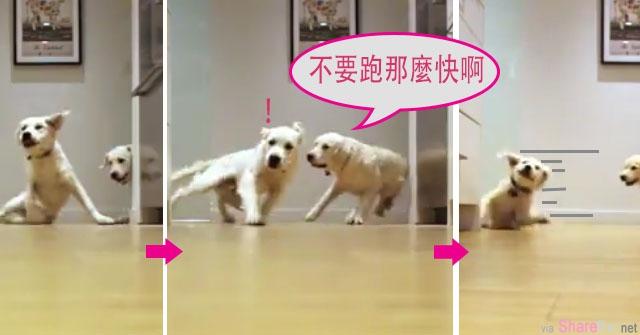 这两只小狗狗为了吃晚餐拼命狂奔,主人偷拍它们转弯时来不及刹车的超可爱动作。网友:是地板太滑啦