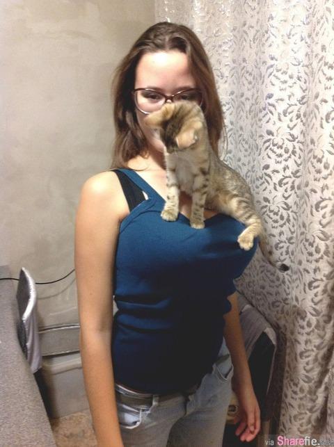 看这24只小猫咪拍的性感照,网友:太享受了吧,好想当那只猫