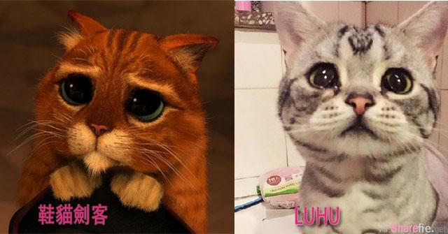 """比鞋貓劍客還無辜!哀傷萌貓Luhu被網友們稱為""""世界上最可憐的貓""""。"""