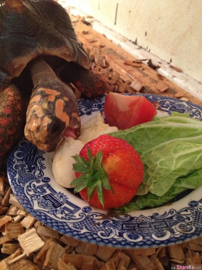 20張動物們等待享用美食的超可愛畫面