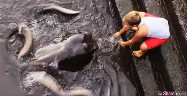 吓人!这名小男孩在水里喂食,当你看清楚陪他玩的生物时绝对让你傻眼