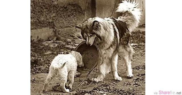 一张狗喂狗的照片传遍了网络,大家看了都觉得照片上的大狗很有爱,却不知发生在这只大狗身上的故事